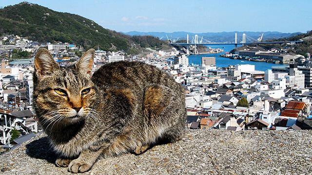 千光寺公園の猫と尾道水道