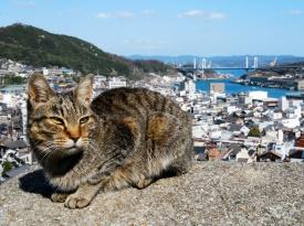 猫好きの聖地(写真:広島県)